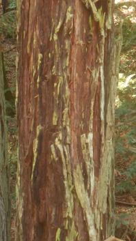 magical bark