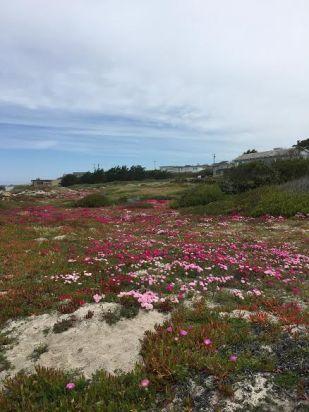 beachy flowers