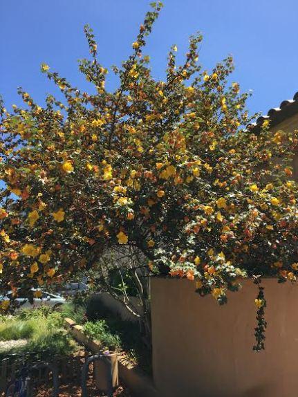 favorite tree/plant