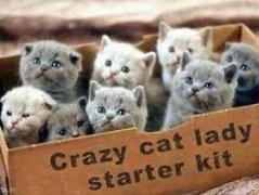 Cat-Lady-Starter-Kit_1