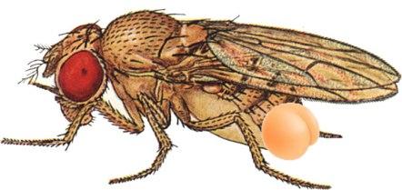 fly-butt