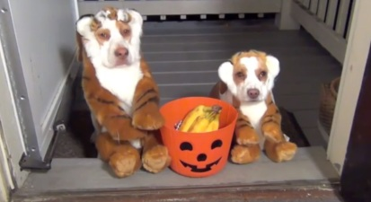 halloweendogs