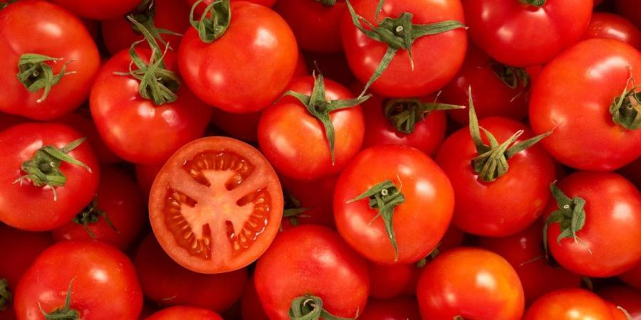 Best Tomato-planting AdviceEver
