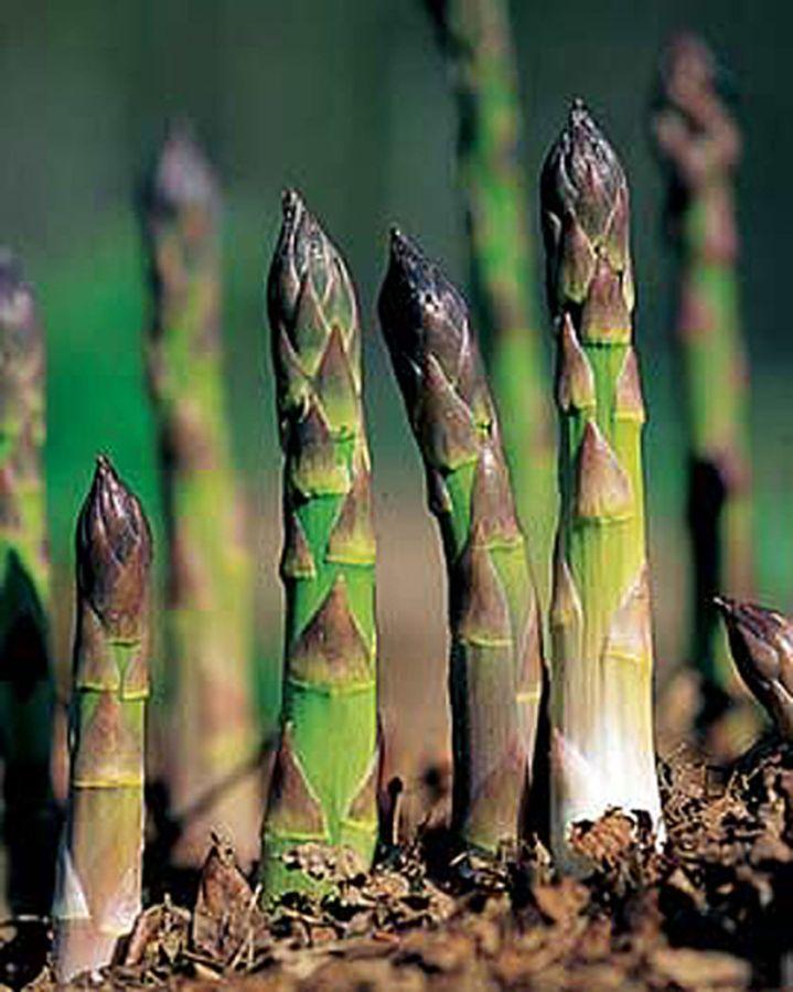 Asparagus, Anyone?