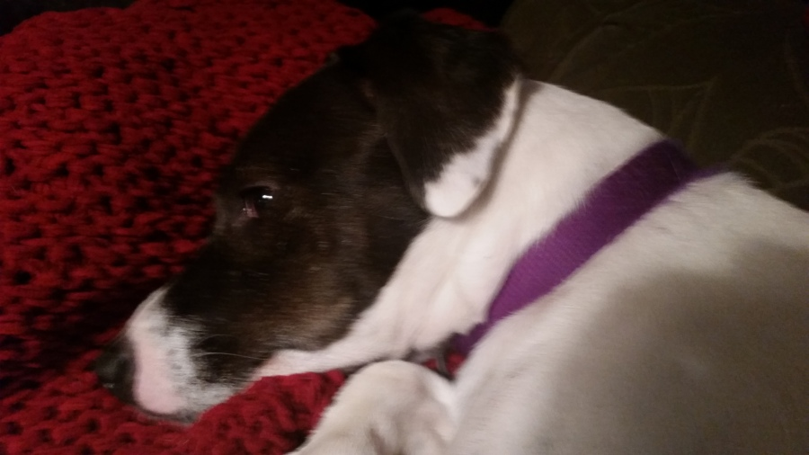 Bad Daisy, RescueDog