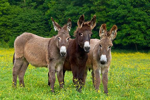Three Donkeys – HalfwayThere